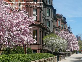 Commonwealth_avenue_in_spring_bosto