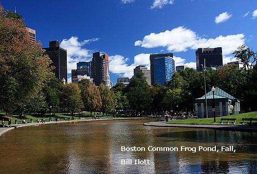 Boston_common_frog_pond_fallbill_il