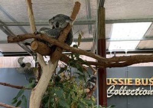Cns_koala