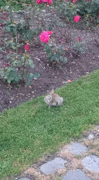 1_rabbit