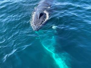Whale_4