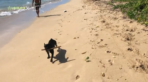 Kahalabeachdog