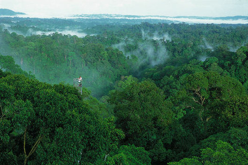 Temburong_forest
