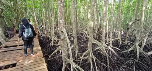 Gaya_island_mangrove3
