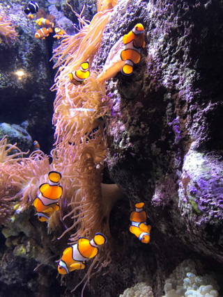 Nemo_2