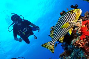 Rsz_diving2