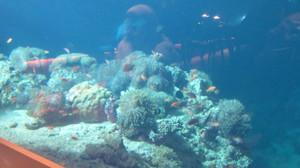 58_underwater_restaurant_05