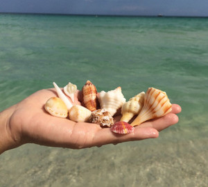 Shell_pic_oct_2015