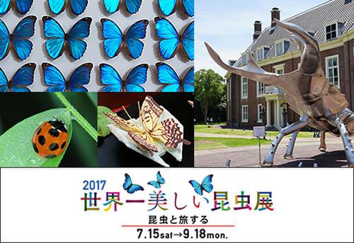 世界一美しい昆虫展