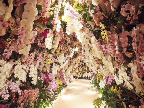 春色トンネル