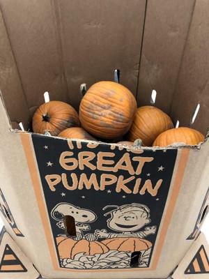 Pumpkin_pumpkin