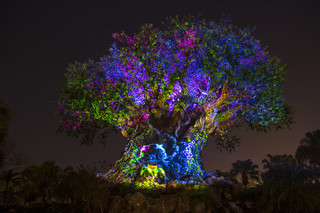 Ak_tree_2