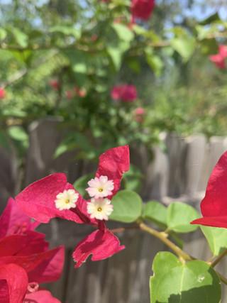 3_flower