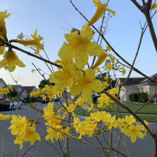 Yellow_flower