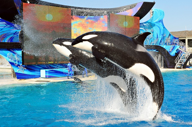 Shamu_in_one_oceans
