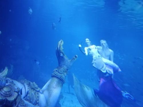 Aquaria_phuket4