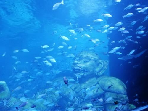 Aquaria_phuket5