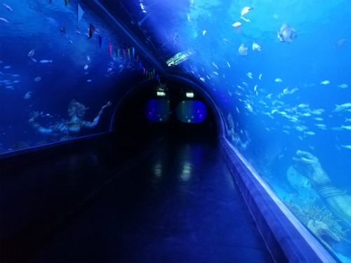 Aquaria_phuket6