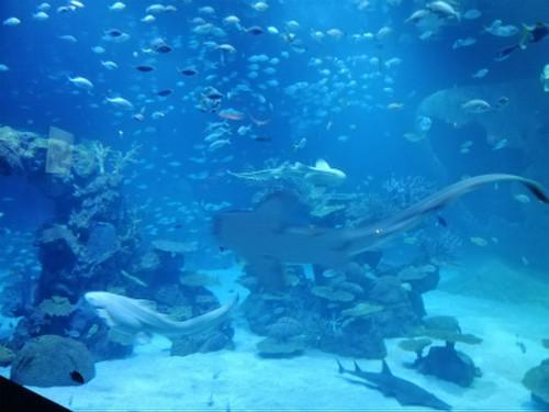 Aquaria_phuket8