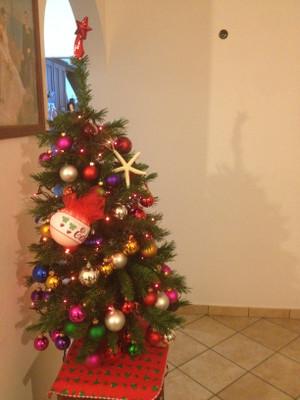 Foto_albero_4