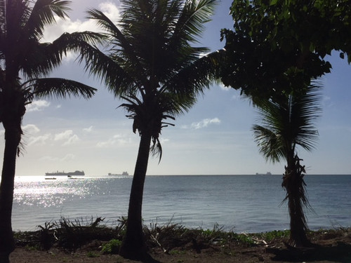 3coconuts_tree_and_sea