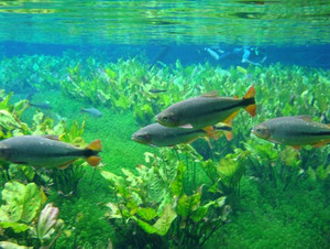 Aquario_natural
