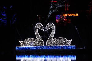 Swans_kissing_photo_credit_rick_ber