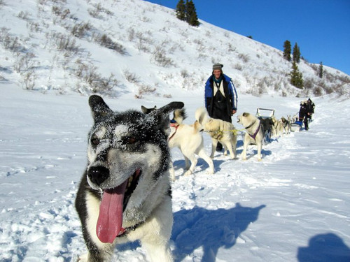 Dogsledding_4